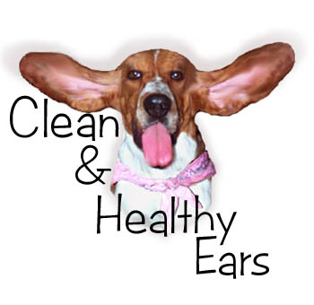 dog ear infection: Thursday Thoughts: Dogs & Ear Wax Ear Mites In Golden Retrievers